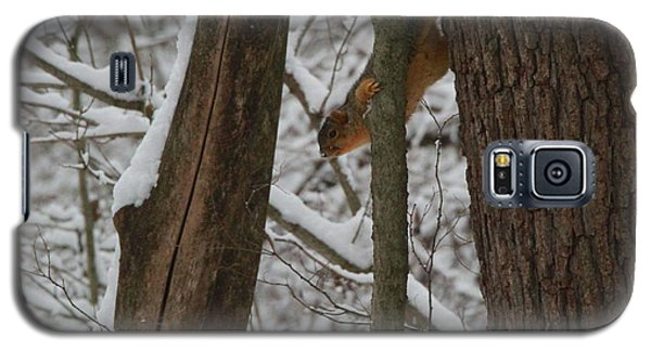 Winter Squirrel Galaxy S5 Case by Dan Sproul
