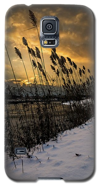 Winter Sunrise Through The Reeds Galaxy S5 Case