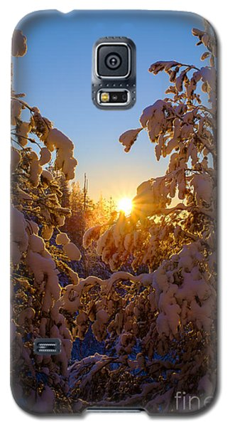 Winter Sunset Behind The Trees Galaxy S5 Case