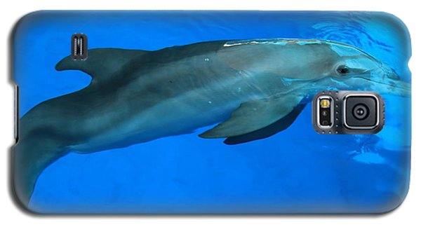Winter The Dolphin Galaxy S5 Case by Doug McPherson