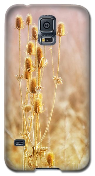 Winter Treasure Galaxy S5 Case