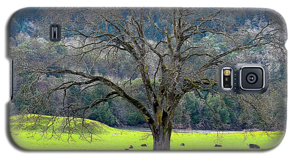 Winter Tree With Cows By The Umpqua River Galaxy S5 Case