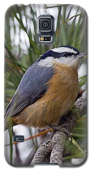 Winter Visitor - Red Breasted Nuthatch Galaxy S5 Case