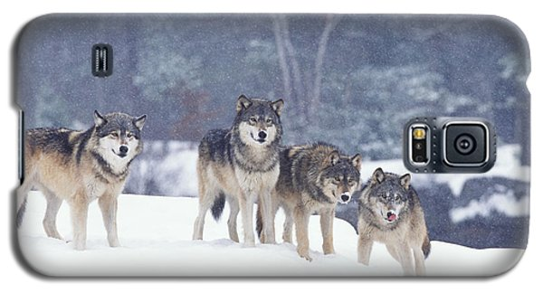Winter Wolf Pack Galaxy S5 Case