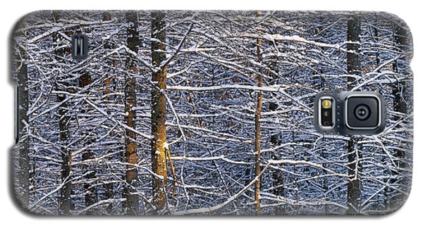 Winter Woods Galaxy S5 Case by Alan L Graham