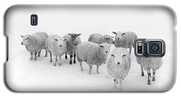 Sheep Galaxy S5 Case - Winter Woollies by Janet Burdon