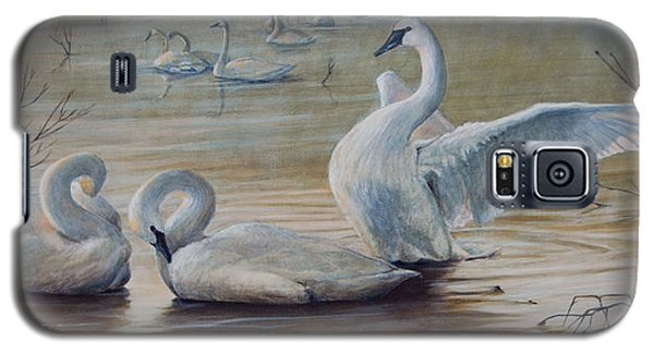 Wintering Trumpeters Galaxy S5 Case by Dreyer Wildlife Print Collections