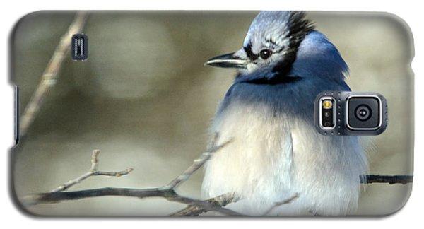 Winter's Jay Galaxy S5 Case