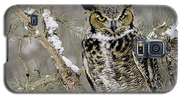 Wise Old Great Horned Owl Galaxy S5 Case