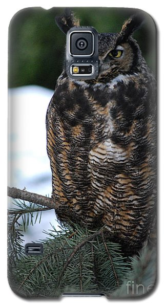 Galaxy S5 Case featuring the photograph Wise Old Owl by Sharon Elliott