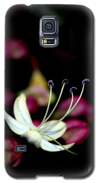 Galaxy S5 Case featuring the photograph Wish I May by Geri Glavis