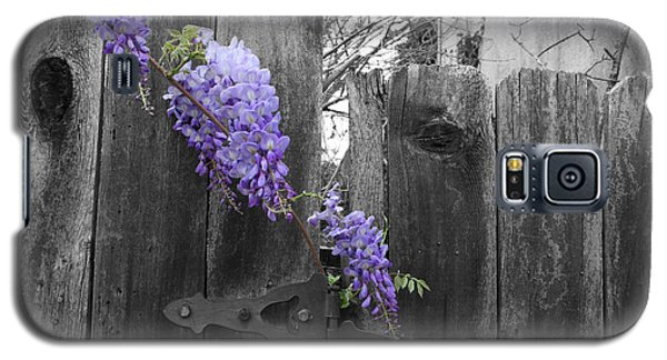 Galaxy S5 Case featuring the photograph Wisteria by Dylan Punke