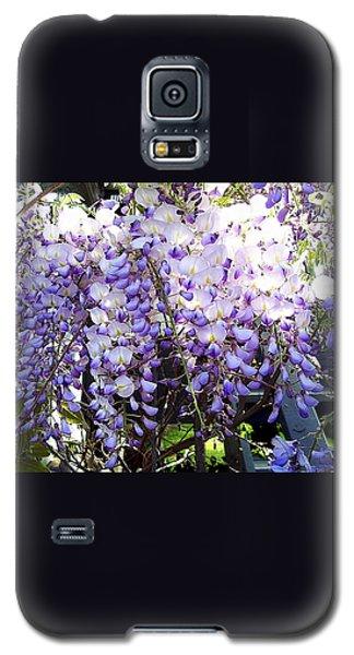 Galaxy S5 Case featuring the photograph Wisteria by Jodie Marie Anne Richardson Traugott          aka jm-ART