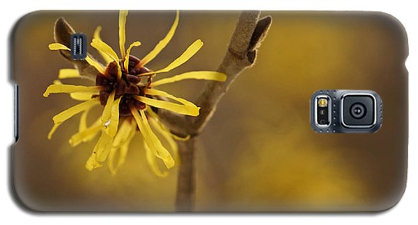 Galaxy S5 Case featuring the photograph Witch Hazel by Inge Riis McDonald