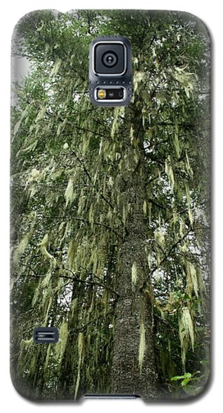 Galaxy S5 Case featuring the photograph Witches Hair On Tree by Amanda Holmes Tzafrir