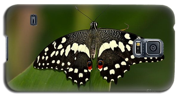 With My Eyes I Can See You Galaxy S5 Case by Ruth Jolly