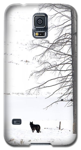 Wolf And The Raven Galaxy S5 Case