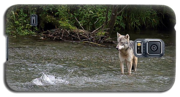 Wolf At Fish Creek Galaxy S5 Case