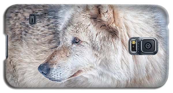 Wolf In Disguise Galaxy S5 Case