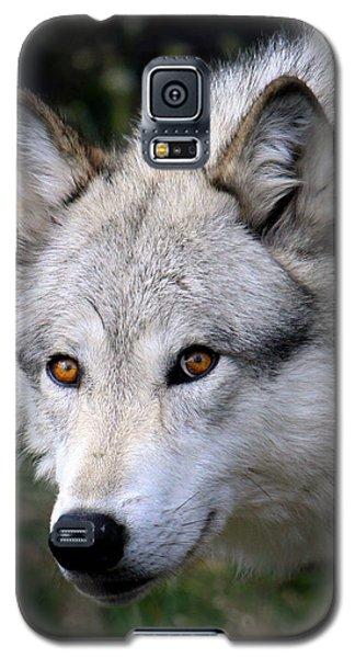 Wolf Stare Galaxy S5 Case