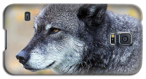 Wolf Galaxy S5 Case by Steve McKinzie