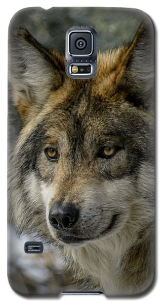 Wolf Upclose 2 Galaxy S5 Case