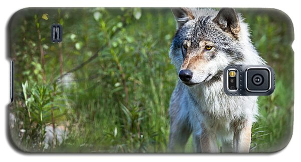 Galaxy S5 Case featuring the photograph Wolf by Yngve Alexandersson