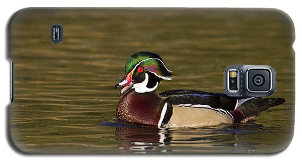 Wood Duck Calling Galaxy S5 Case by Bryan Keil