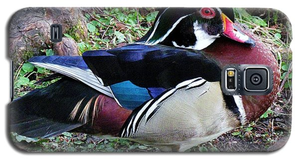 Galaxy S5 Case featuring the photograph Wood Duck by Cynthia Guinn