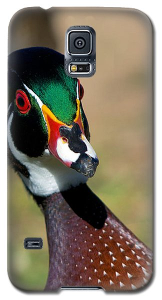 Wood Duck Drake Looking At Me Galaxy S5 Case