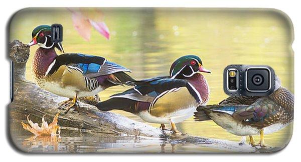 Wood-ducks Panorama Galaxy S5 Case by Mircea Costina Photography