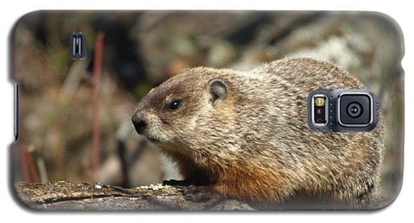 Galaxy S5 Case featuring the photograph Woodchuck by James Peterson