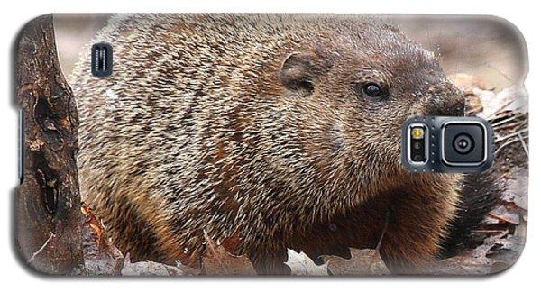 Woodchuck Watching Galaxy S5 Case by Doris Potter