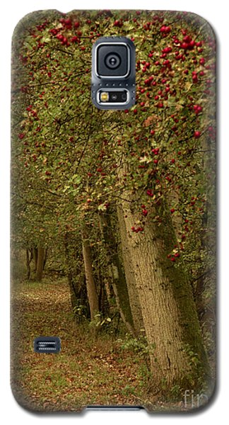 Woodland In Autumn Galaxy S5 Case