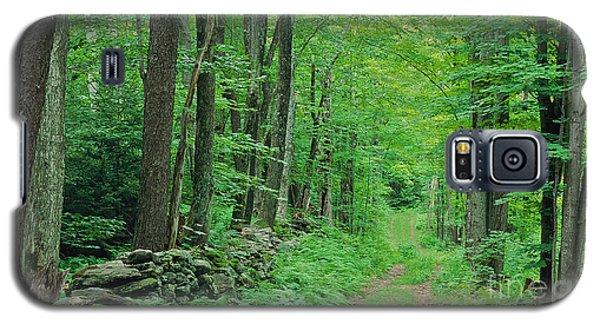 Woodland Trail Galaxy S5 Case by Alan L Graham