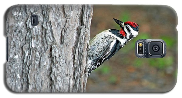 Galaxy S5 Case featuring the photograph Woodpecker by Barbara West