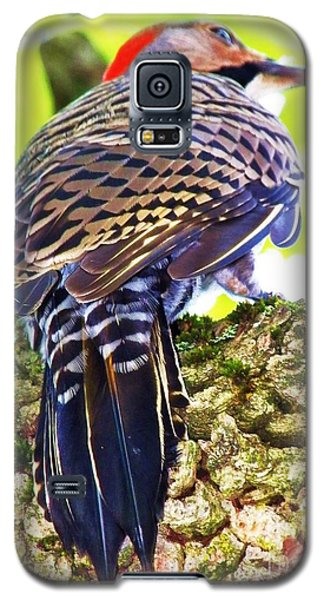 Galaxy S5 Case featuring the photograph Woodpecker Common Flicker by Judy Via-Wolff