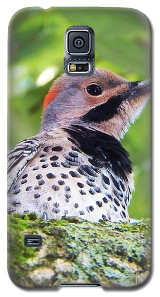 Galaxy S5 Case featuring the photograph Woodpecker by Judy Via-Wolff