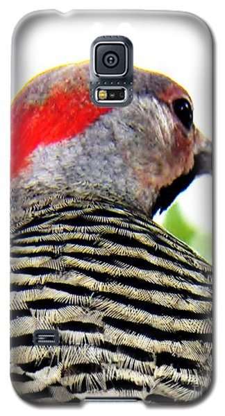 Galaxy S5 Case featuring the photograph Woodpecker With A Red Heart by Judy Via-Wolff