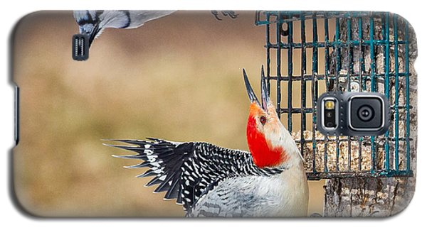 Woodpeckers And Blue Jays Square Galaxy S5 Case by Bill Wakeley