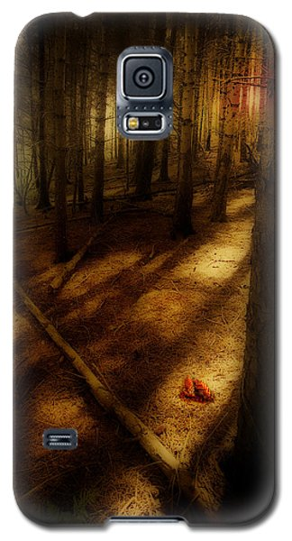 Woods With Pine Cones Galaxy S5 Case by Meirion Matthias