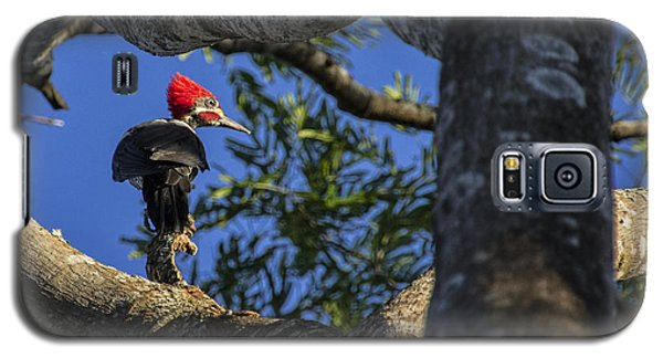 Woody Woodpecker Galaxy S5 Case by David Gleeson