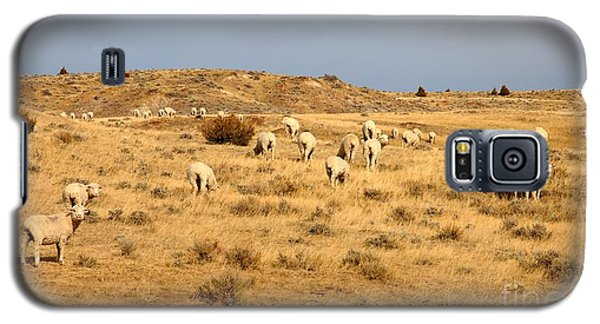 Wool You Sheep With Me Galaxy S5 Case