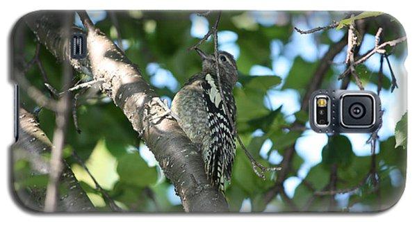 Worn Out Woodpecker Galaxy S5 Case