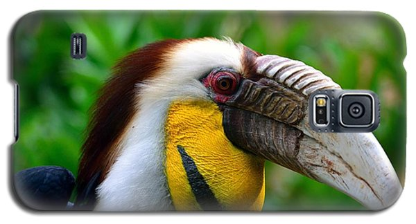 Galaxy S5 Case featuring the photograph Wreathed Hornbill by Lisa L Silva