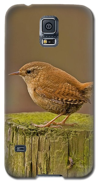Galaxy S5 Case featuring the photograph Wren by Paul Scoullar