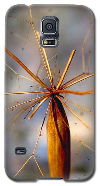 Galaxy S5 Case featuring the photograph Wth? by Joe Schofield