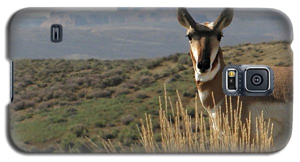 Wyoming Pronghorn Galaxy S5 Case by Katie Wing Vigil