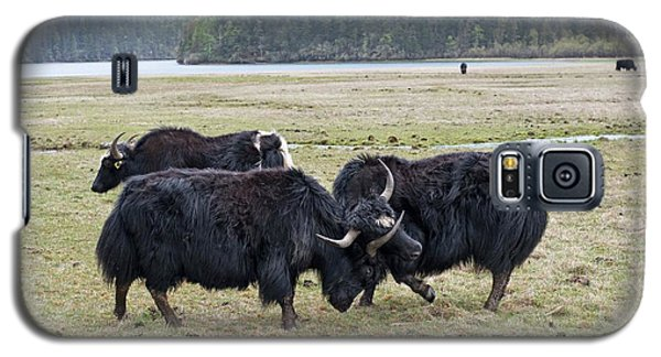 Yaks Fighting In Potatso National Park Galaxy S5 Case