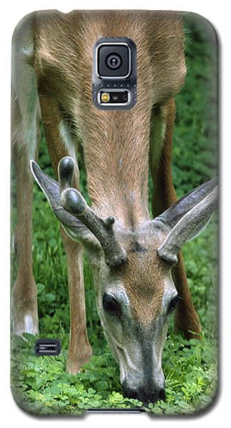 Yearling Buck In The Clover Galaxy S5 Case